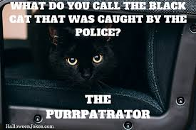 What Do You Do Memes - halloween joke black cat meme 2 what do you call the black cat
