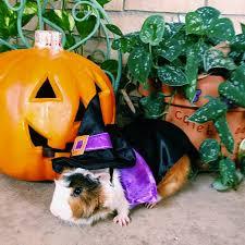 Halloween Pet Costume 30 Hilarious Pet Halloween Costumes Huffpost