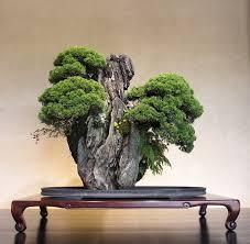 rolling along with bonsai rock forests bonsai bark