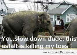 Elephant Meme - 39 very funny elephant memes pictures jokes images picsmine