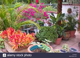 roof garden plants trendy tropical flowering plants from potted plants tropical