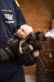 affenpinscher skin problems 12 ohio puppy mills rank among the worst in u s scene and heard
