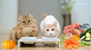 alimentazione casalinga gatto alimentazione naturale nel gatto proteine di qualit