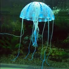 cheap glowing in aquarium find glowing in aquarium
