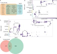 List Of Flags Protein Interaction Network Of The Mammalian Hippo Pathway Reveals