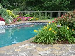 Landscaping Ideas For Florida by Best 25 Plants Around Pool Ideas On Pinterest Landscaping