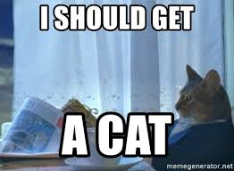 Newspaper Meme Generator - newspaper cat realization meme generator