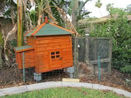 tropical henhouse backyard chickens