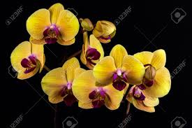 yellow orchid up of yellow orchid flower zen in the of flowers
