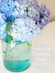 tip to keeping cut hydrangeas looking fresh love of family