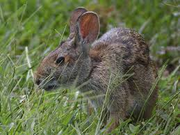 rabbit facts for kids amazing facts about rabbits for kids