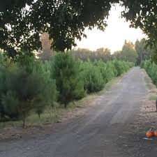 silveyville pumpkin u0026 christmas tree farm home facebook