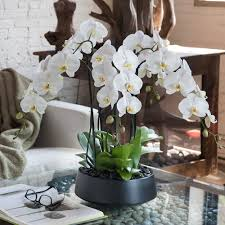 white orchids orchid arrangement grandioso black with white orchids orchid
