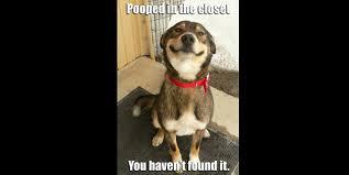 Happy Dog Meme - a happy dog meme roamaroundapp via tumblr funny pinterest