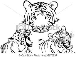tiger drawings black and white illustrations vectors