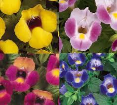 Flowers For Morning Sun - 27 best morning sun plants images on pinterest sun plants