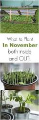 what to plant in november both inside and outside pictures