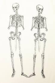 skeletons halloween 8 best skeletons images on pinterest skeletons awesome things