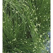 shop 2 5 quart fiberoptic grass lw03159 at lowes