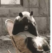 Sad Panda Meme - sad panda face the best panda of 2018