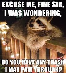 Racoon Meme - raccoon dump album on imgur