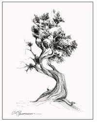 cypress tree drawing search ink