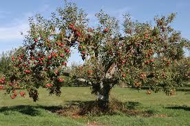 fruit tree garden layout food plot u0026 fruit trees