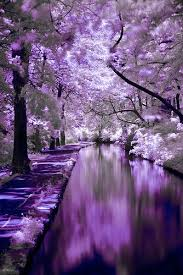 Colors Of Purple Best 25 Purple Trees Ideas On Pinterest Colorful Trees Places