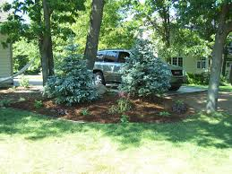 landscaping ideas privacy trees spend more times in the