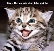 Sad Kitten Meme - kitten meme 28 images sad kitten memes image memes at relatably