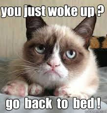Bed Meme - cat bed memes quickmeme