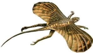 mammiferi volanti pterosauri lucertole volanti