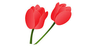red tulip clip art at clker com vector clip art online royalty