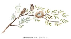 two birds on branch stock images royalty free images vectors