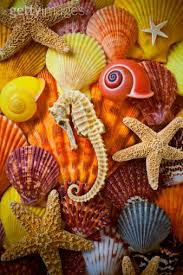 assorted seashells seahorse and assorted sea shells shell seahorses and