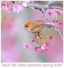 beautiful spring beautiful spring birdy picture postcard furry talk