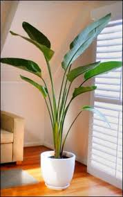 appealing indoor plants with ceramic flower pot modern of