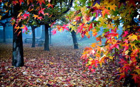 view lovely fall leaves bench magic autumn splendor