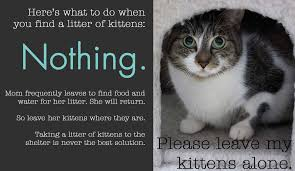 Leave Kittens Alone Jpg