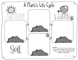 fun organizer for illustrating the life cycle of a plant