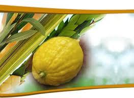 lulav holder 17 best esroginternational images on fruit lulav and