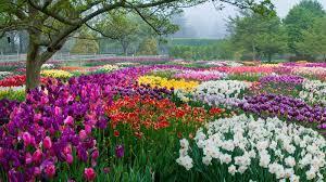 Artful Gardens Spring Blooms Season Longwood Gardens