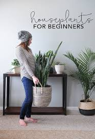 Houseplants For Beginners How To Keep Houseplants Alive - Home decoration plants