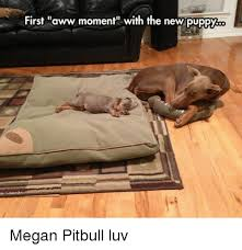 Aww Memes - first aww moment with the new puppy megan pitbull luv aww meme