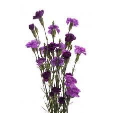 Purple Carnations Purple Flowers Carnations Mix Set Summer Wedding Flowers