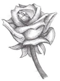 rose sketch by goddessotu on deviantart