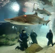 best fan for aquarium 41 best fan photos images on pinterest aquarium aquarius and