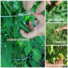 vegetable garden plants and pests with nicole