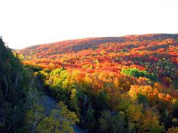 Minnesota forest images Forests national usa forest superior leaves fall minnesota jpg