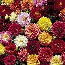 61 best cut flowers traditional look images on pinterest cut